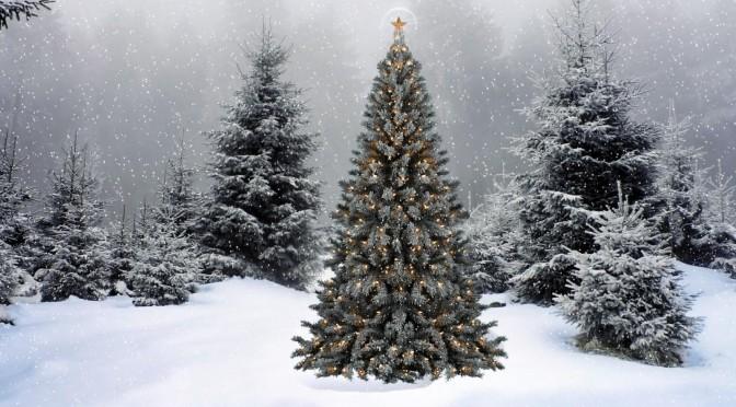 Waldweihnacht am Sonntag, 23. Dezember